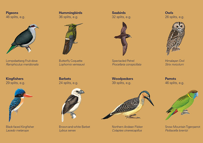 Illustrated Checklist of the Birds of the World - Taxonomic Results
