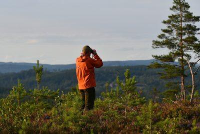 Where to Watch Wildlife