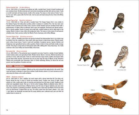 Field Guide to the Birds of Machu Picchu and the Cusco Region, Peru sample page