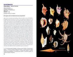Conchas y caracolas del mundo sample page