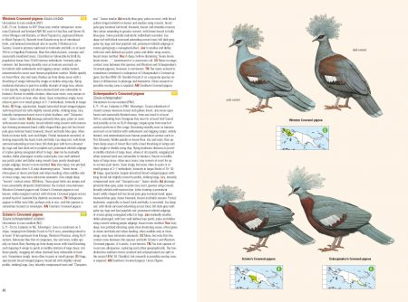 Birds of New Guinea sample page