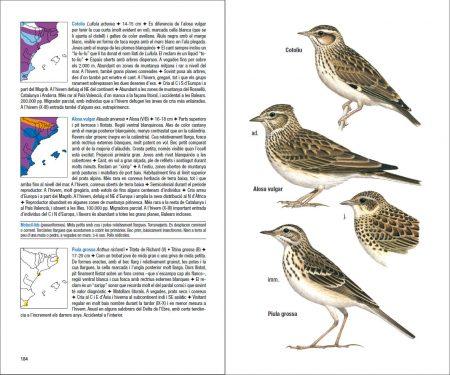 Ocells de Catalunya, País Valencià i Balears sample page