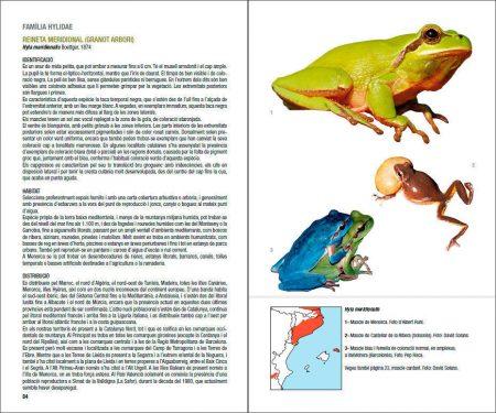 Amfibis i rèptils de Catalunya, País Valencià i Balears sample page