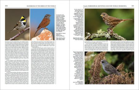 Handbook of the Birds of the World - Volume 16 sample page